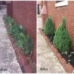 Before and after of landscape remodel by BTC